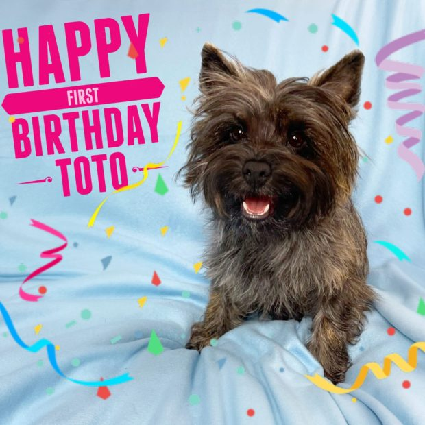 Toto's Ozsome First Birthday!